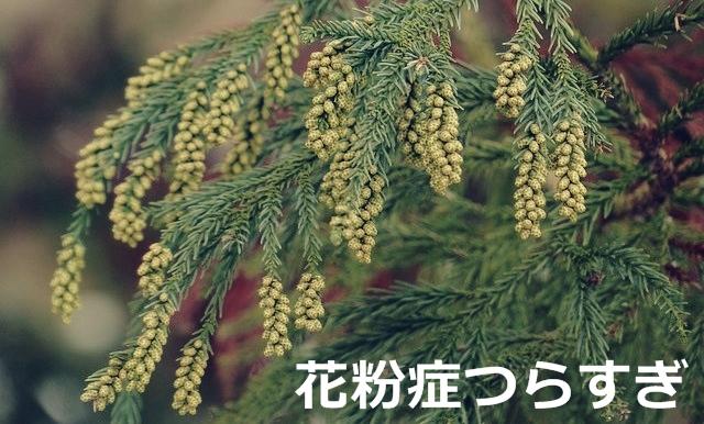 Japanese-cedar